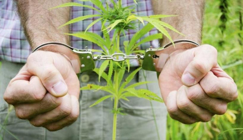 60672bf007a1ba3ad57f60058f1b46b9 - Какие растения по закону нельзя выращивать в России