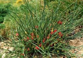 Bez nazvaniya 1 - Какие растения по закону нельзя выращивать в России
