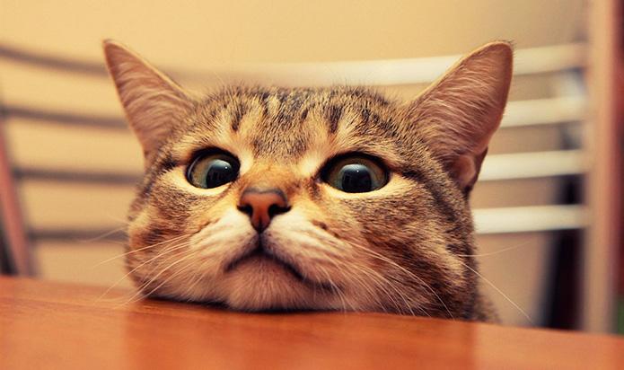 cat - Как выбрать домашнего питомца