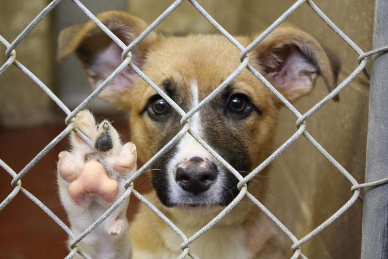 dog shelter - Как выбрать домашнего питомца
