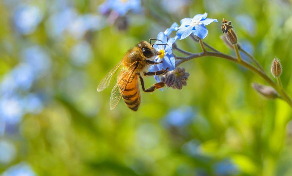 cvety makro nasekomoe rastenie pcela 1024x619 - Пчелы и математика: являются ли данные насекомые математически одаренными?