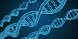 Белок р53 — секрет долголетия?