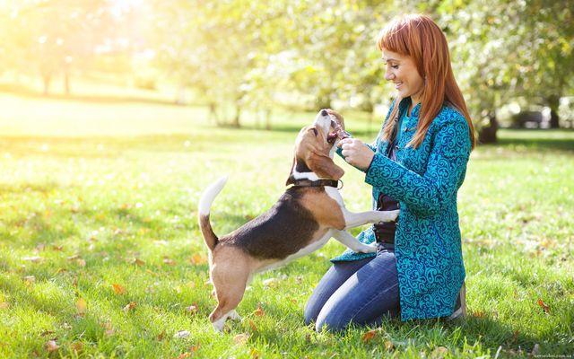 allergiya 04 - Собачьи секреты: восприятие информации животными