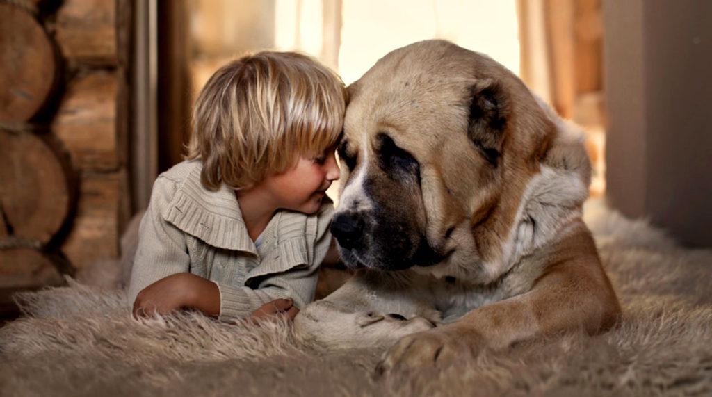 pure love child cute dog face animals boy ultra 3840x2160 hd wallpaper 18282481 1024x571 - Собачьи секреты: восприятие информации животными