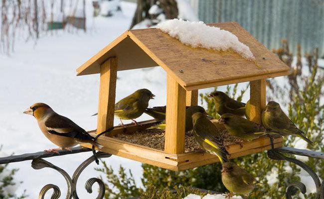 72663febbcabc2495b76b642617228eb - Как сделать кормушку для птиц из разных материалов