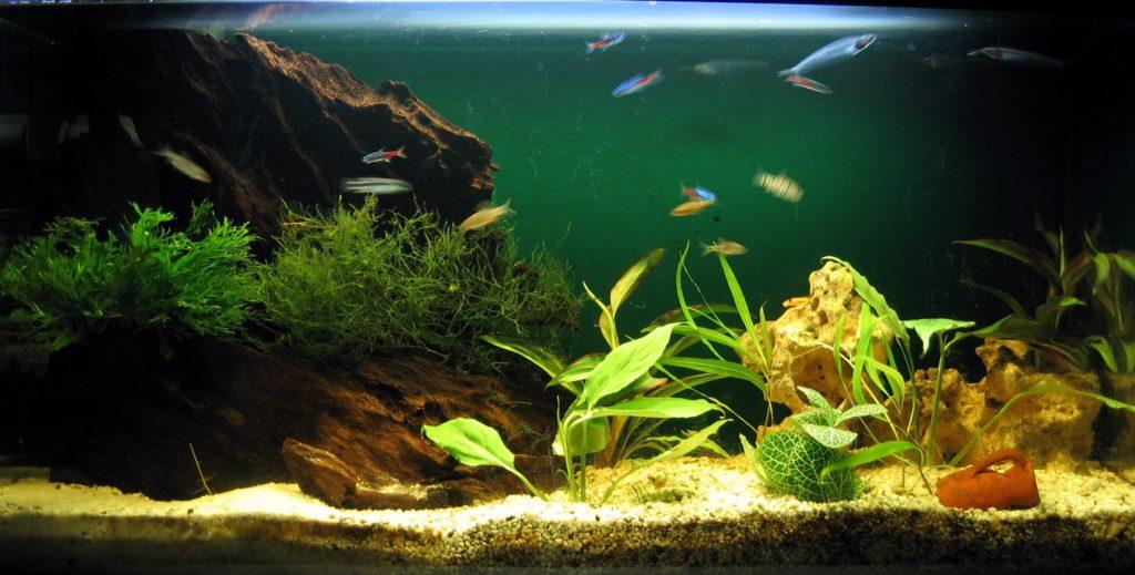 Aquariumsimple 1024x519 - Как перевезти аквариум зимой