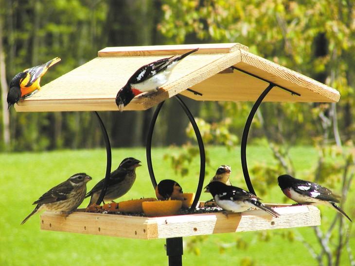 Kormushka dlya ptits svoimi rukami 12 - Как сделать кормушку для птиц из разных материалов