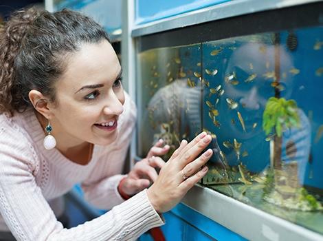 akvarium 2 1507295114 - Как перевезти аквариум зимой