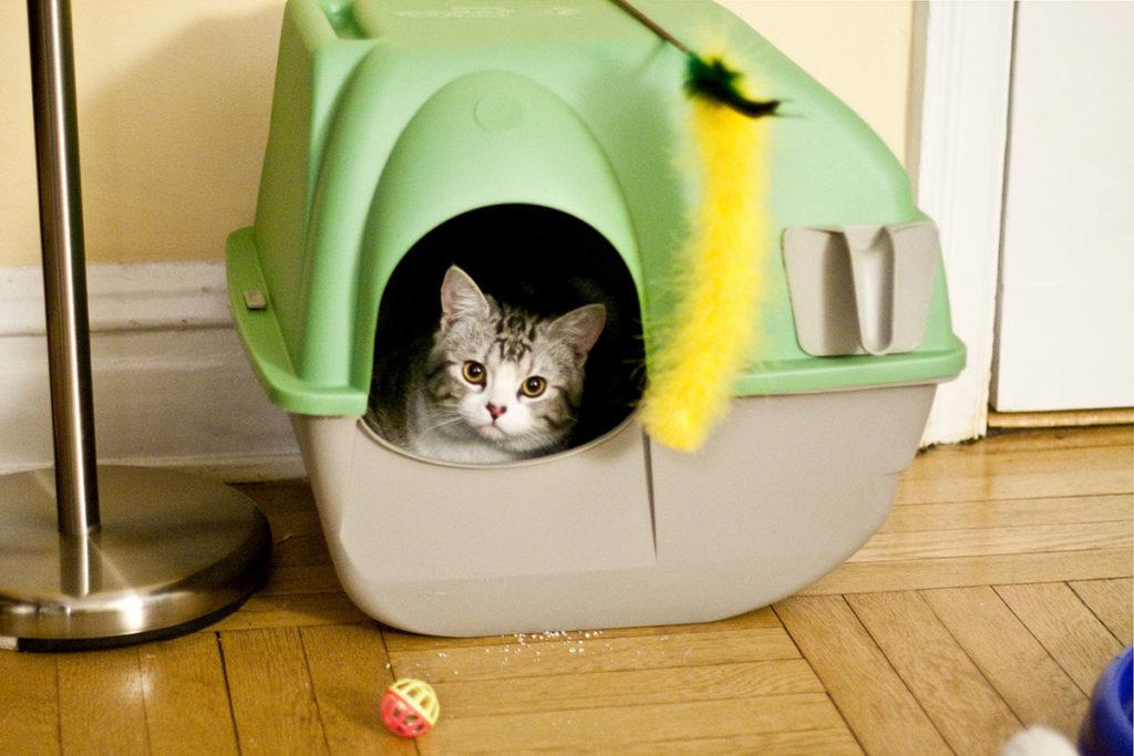 03 1024x683 - Как приучить кота к лотку быстро и без хлопот