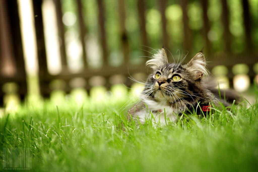 Animals   Cats     Grey cat lying on the grass 085230  1024x683 - Как перевезти кота на дальнее расстояние?