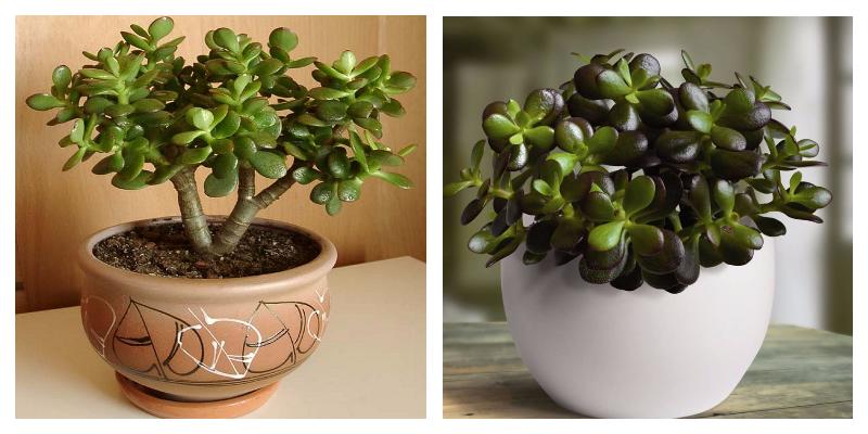 MyCollages 10 - Уход за комнатными растениями в домашних условиях