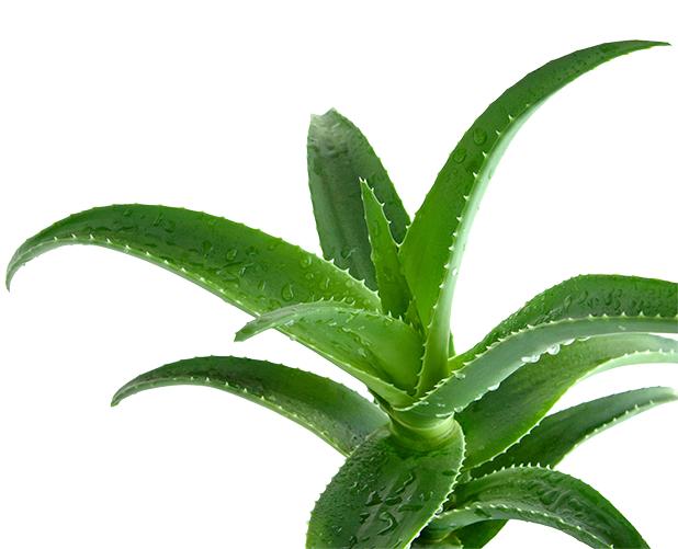 aloedutyfreesalon - Уход за комнатными растениями в домашних условиях