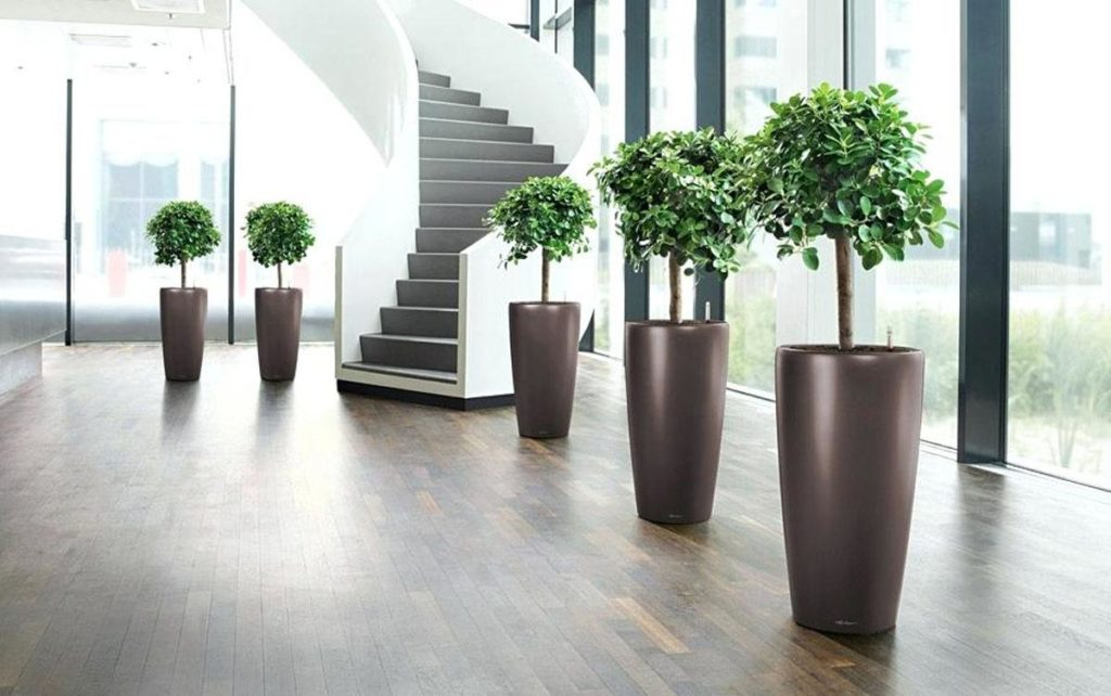 lechuza self watering planters instructions lechuza cubico self watering planters lechuza rondo 40 with ficus lechuza self watering planters india 1024x642 - Как вырастить фикус Бенджамина в домашних условиях