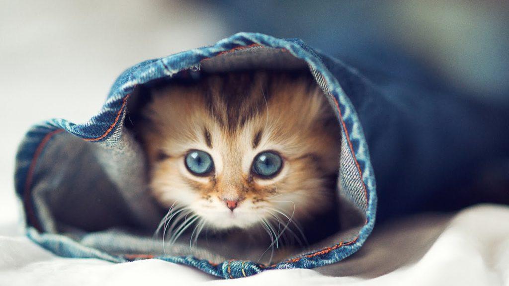 maxresdefault 1 1024x576 - Как приучить кота к лотку быстро и без хлопот