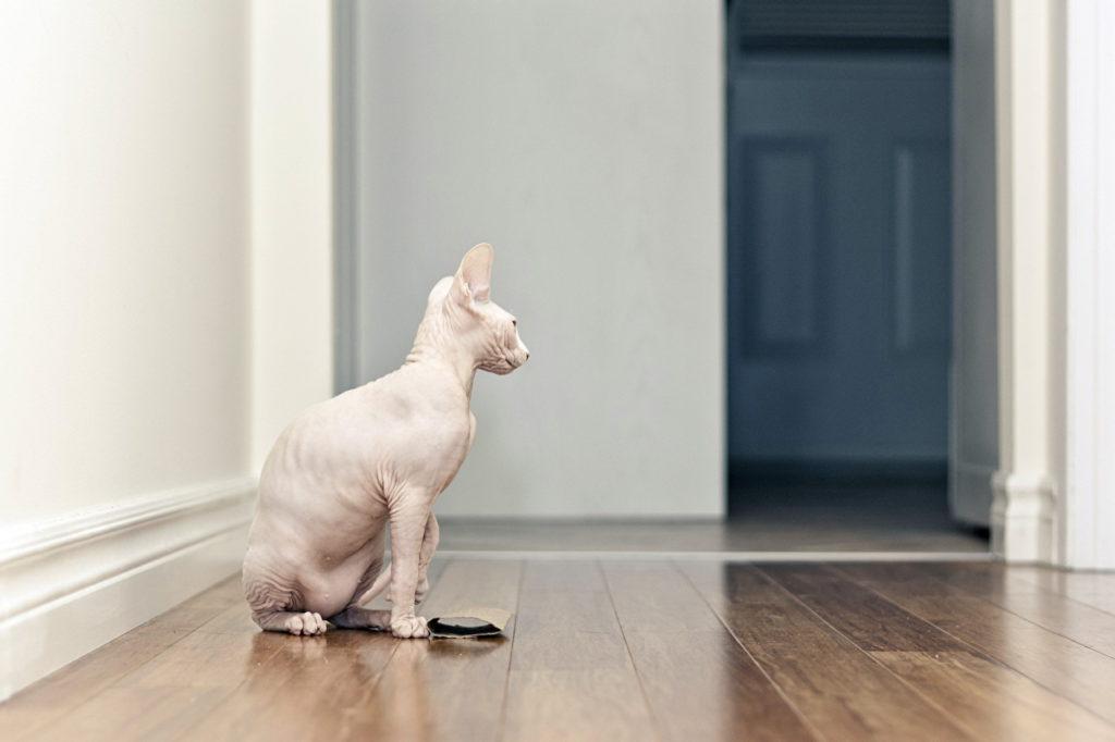 348000 admin 1024x682 - Дрессировка кота: так бывает?