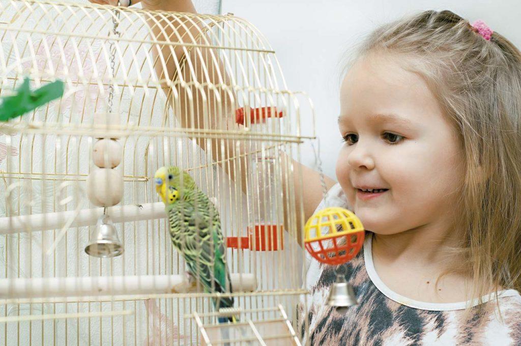 b7de0924ba38cf78db37eccce1da099b 1024x680 - Как ухаживать за попугаем