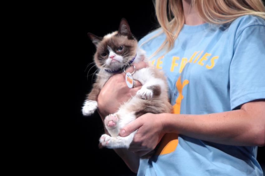 stavshiy memom kot grumpy cat vpervye otsudil 710 tysyach dollarov za narushenie avtorskih prav 1 - Умер легендарный Грампи Кэт