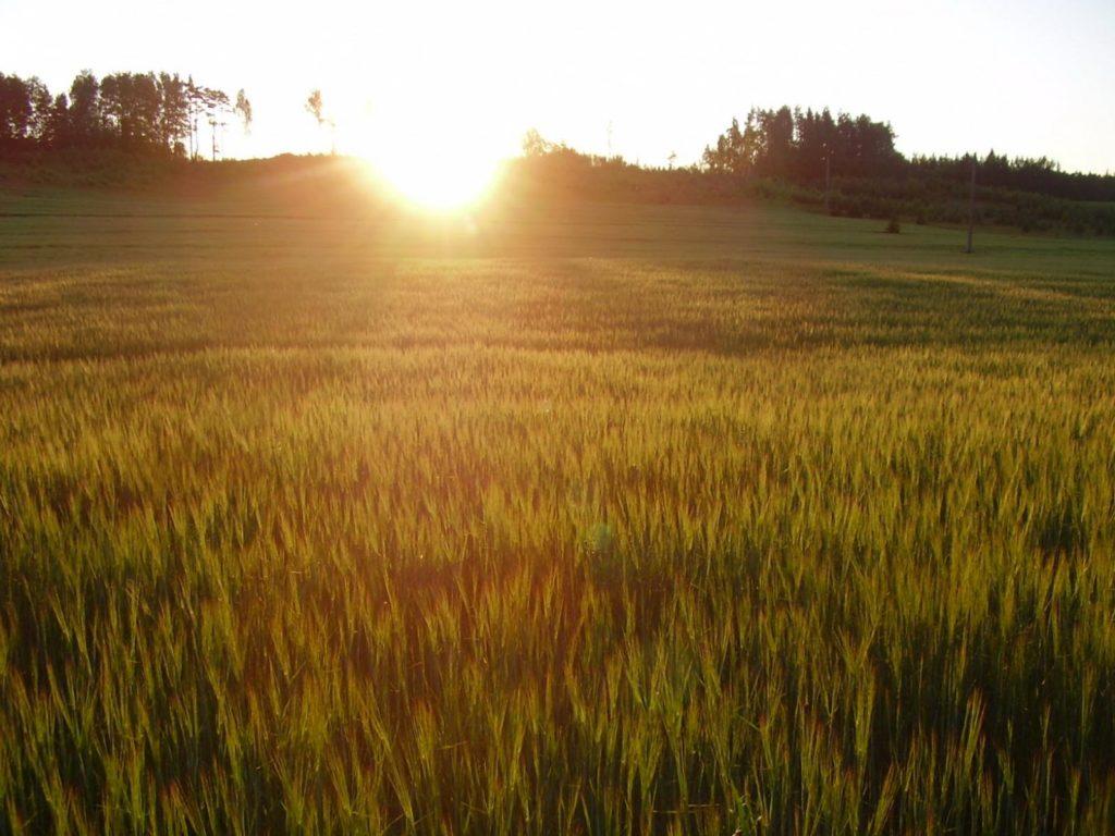 voshod v pole krasivye dlya rabochego stola 1600x1200 1024x768 - 20 идей, как сделать красивые фото